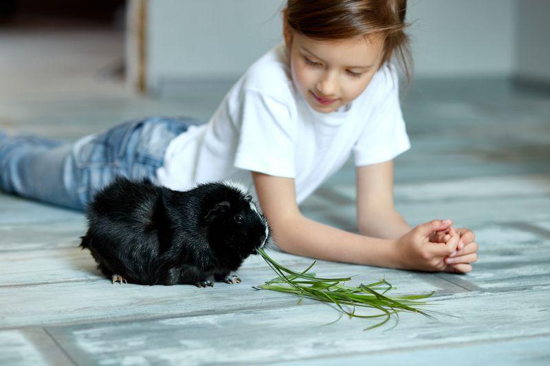 Wychowywanie dzieci ze zwięrzętami